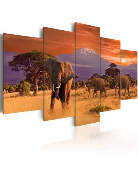 Slika Africa Elephants