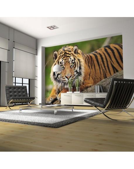 Stenska poslikava Sumatran tiger