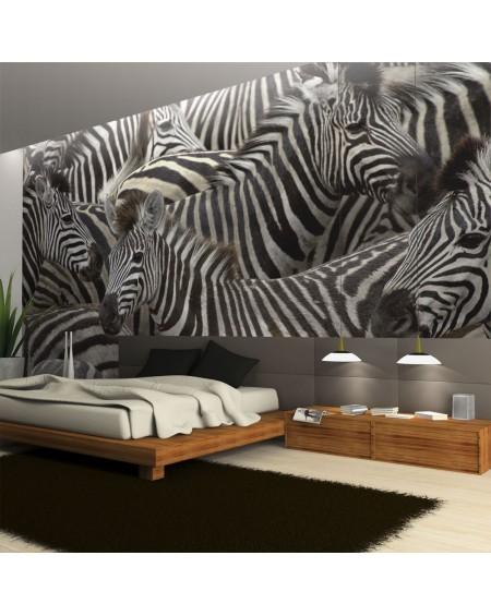 Stenska poslikava - Herd of zebras