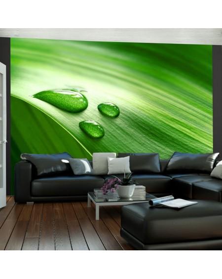 Stenska poslikava - Leaf and three drops of water