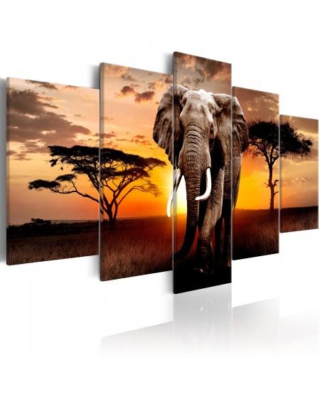 Slika Elephant Migration