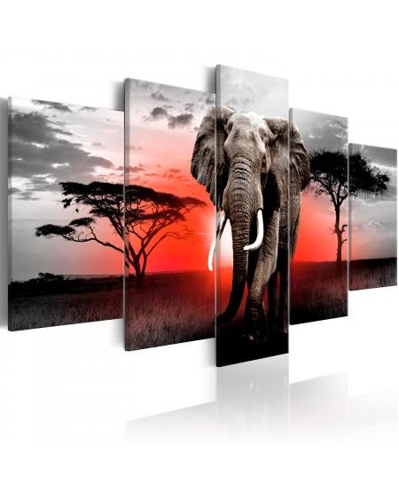 Slika Lonely Elephant