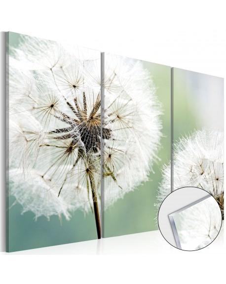 Akrilni tisk Fluffy Dandelions [Glass]