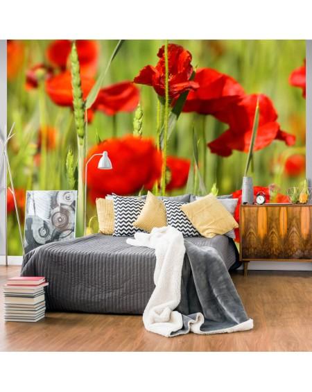 Stenska poslikava - Cereal field with poppies