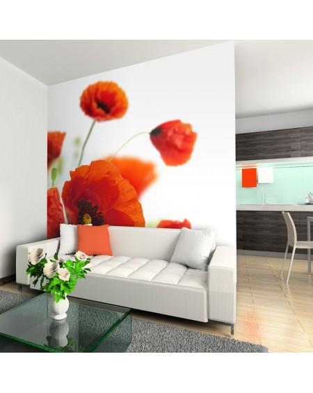 Stenska poslikava - Poppies on the wihite background