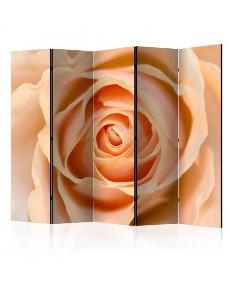 Španska stena Peachcolored rose II [Room Dividers]